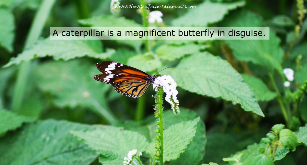 A caterpillar is a magnificent butterfly in disguise