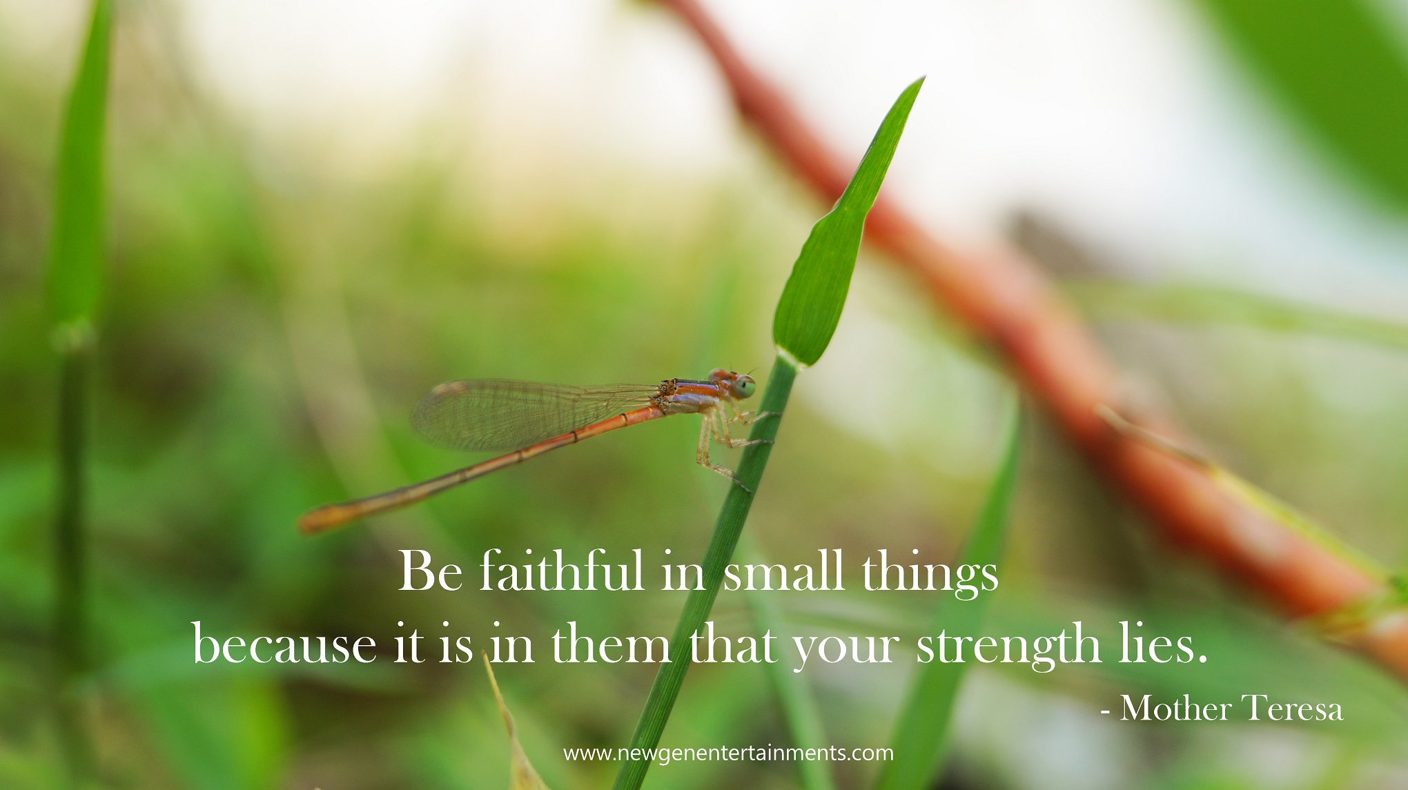 Be faithful in small things because it is in them that your strength lies