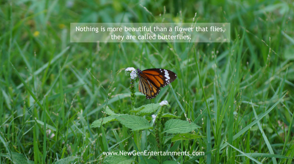 Nothing is more beautiful than a flower that flies, they are called butterflies