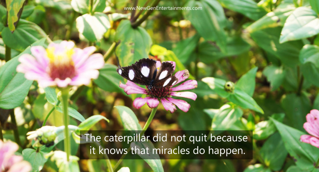 The caterpillar did not quit because it knows that miracles do happen